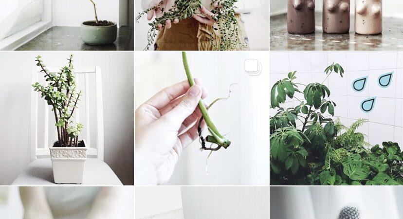 Utdrag från Plantbyråns Instagram